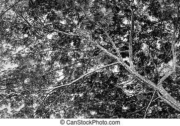 Background black trees