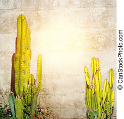 Background block wall has 2 cactus tree