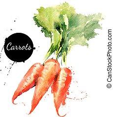 background?, carrots., hand, vattenfärg, oavgjord, vit, målning