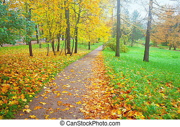 Background colorful fall leaves in the autumn ground and footpath in the park