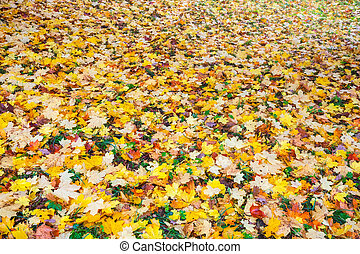 Background colorful fall leaves in the autumn ground in the park