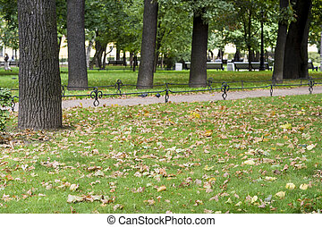 Background composition with fallen leaves on a green lawn in the city Park.