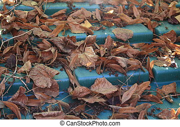 Background covered roof of leaves in autumn