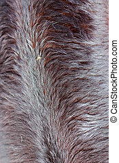 Background cow fur.