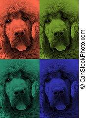 background dog 1
