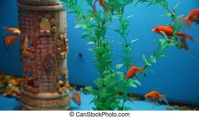 background fish aquarium blue calm swim grass saver video