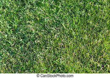 Background from a fresh juicy bright green grass -...