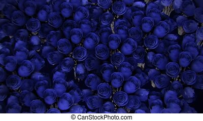 Background from a variety of blue roses