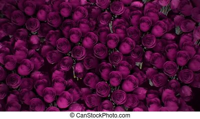 Background from a variety of pink roses