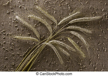 Background from burlap with ears of a rye. Top view.