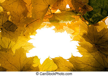 Background from leaves