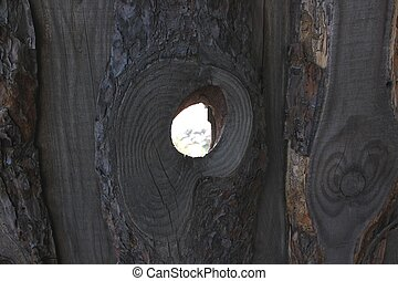 Background from the bark of a tree