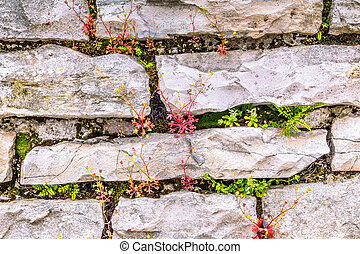 Background from the outer stone wall with flowers.
