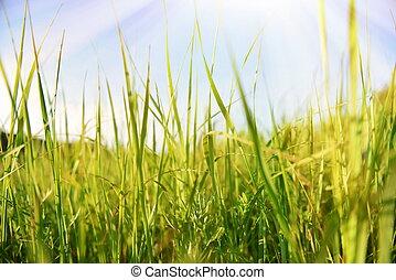 Background grass field