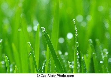 green lawn - background green lawn freshly mowed