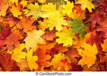 Background group autumn leaves