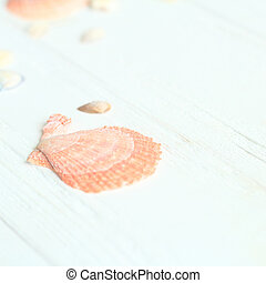 background image of seashells on a wooden table.photo with place for text