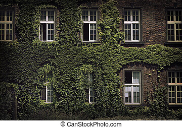 house close-up with windows twined with wild grapes