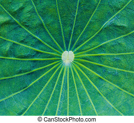 background lotus leaf texture