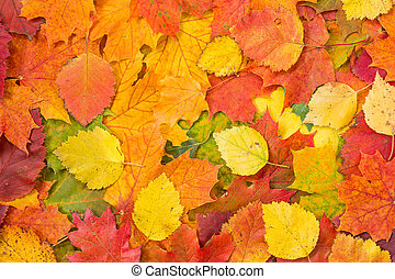 Background made of fallen autumn leaves