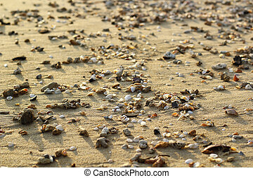 background made of pile of seashells on the sand