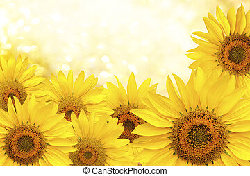 Background made of yellow sunflowers. Sunflower natural background