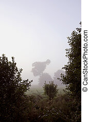Background mystical forest site early morning fog