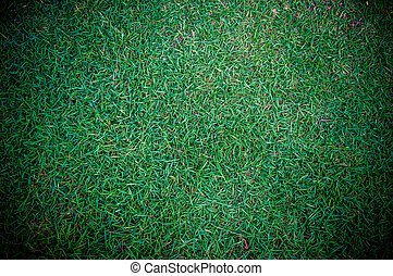 Background of a green grass. For inserting text or creative website.