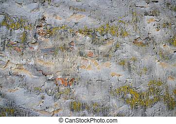 Background of a grungy gray cement wall with moss