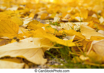 Background of Autumn Leaves. Autumn Foliage. Shallow depth of field
