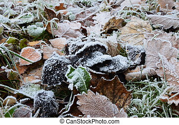 background of autumn leaves in the frost