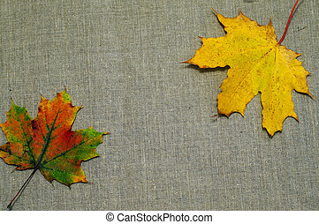 Background of autumn leaves on fabric