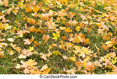 Background of autumn leaves on grass