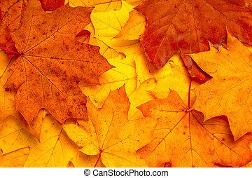 background of autumn orange maple leaves