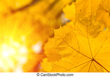 Background of autumn yellow green leaves