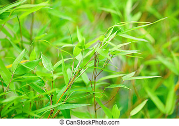 background of bamboo branch