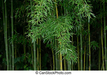 Background of Bamboo Plants