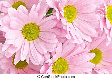 Background of beautiful bright pink flowers