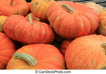 Background of big pumpkins