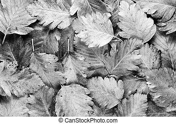 Background of black and white leaves