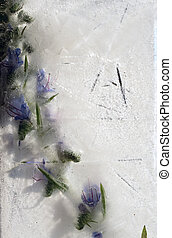 Background of blue   flower  with green leaves frozen in ice
