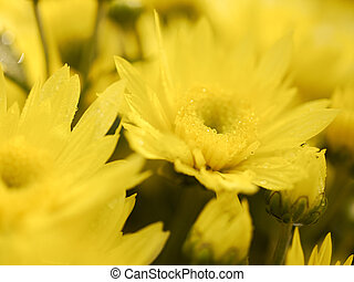 Background of blurred yellow flower