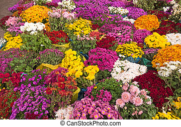 Background of bouquets of autumn flowers