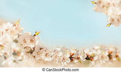 background of branch of blossoming cherry on blue