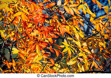Background of bright autumn leaves on the branches