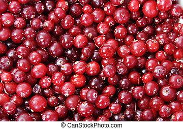 background of bright red berries frozen cranberries