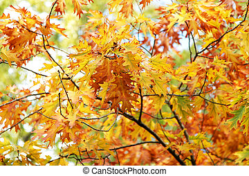 Background of bright yellow and red autumn leaves