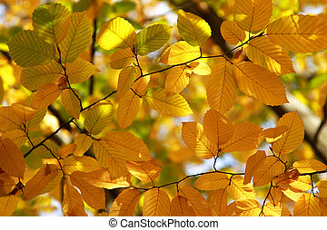 Background of bright yellow and red leaves in autumn, outdoors on a sunny day