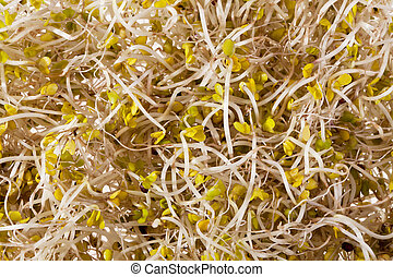 background of broccoli sprouts macro