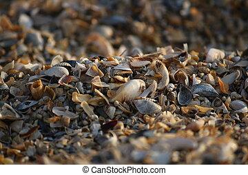 Background of broken seashell fragments on the sandy beach of Southern Ukraine.